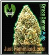 We Sell only Original Monster Genetics Bruce Banner Auto Weed Seeds